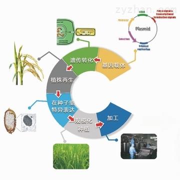 质蛋白质和多肽表达服务;蛋白质和多肽的下游纯化