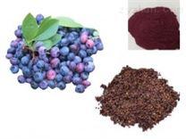 蓝莓提取物 蓝莓果粉 天然植物提取物 厂家直销