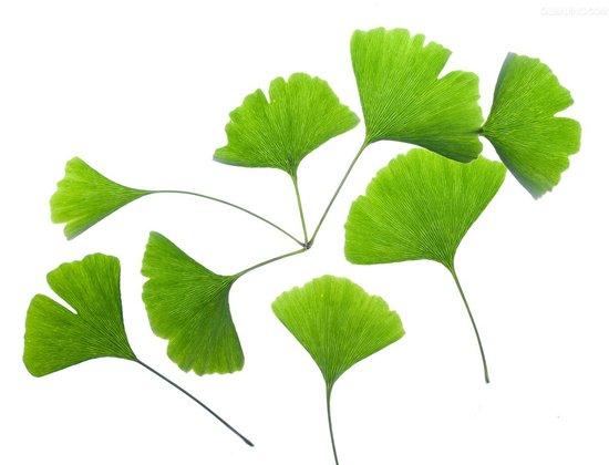 背景 壁纸 绿色 绿叶 树叶 植物 桌面 550_420